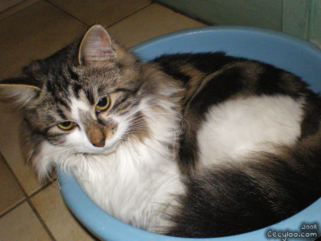 Charming Lil'Cat/Pichat aime les bassine =D